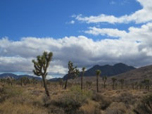11. Joshua Tree National Park